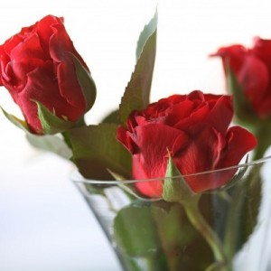 roses-400_400